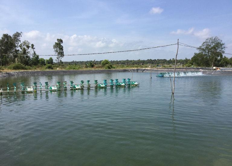 ベトナムの養殖池